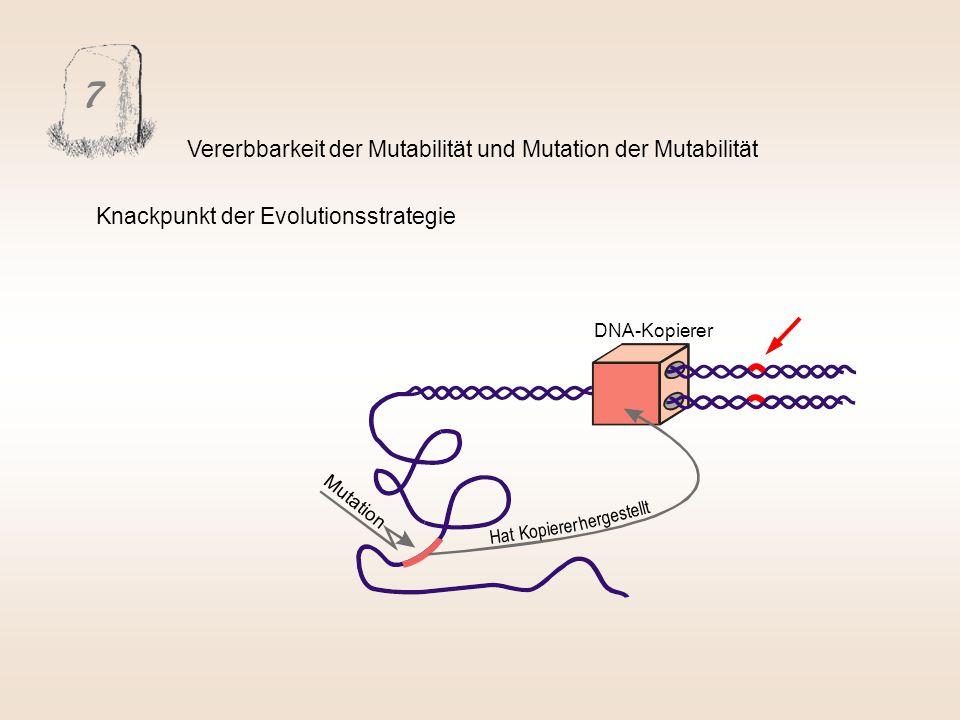 7 Vererbbarkeit der Mutabilität und Mutation der Mutabilität