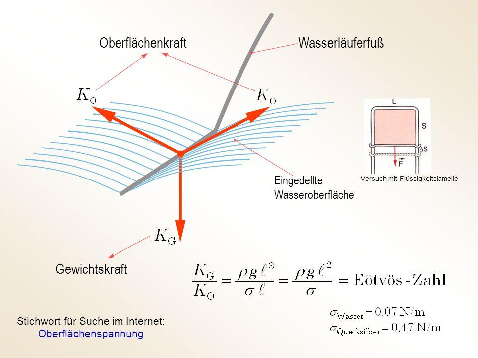 Stichwort für Suche im Internet: Oberflächenspannung
