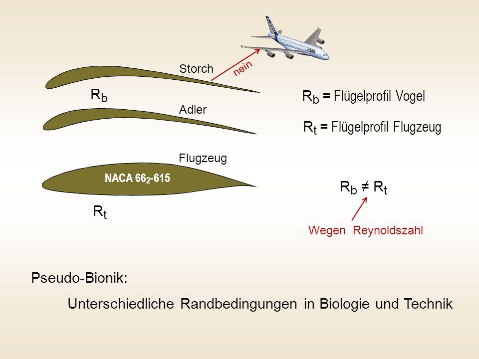 Rb = Flügelprofil Vogel