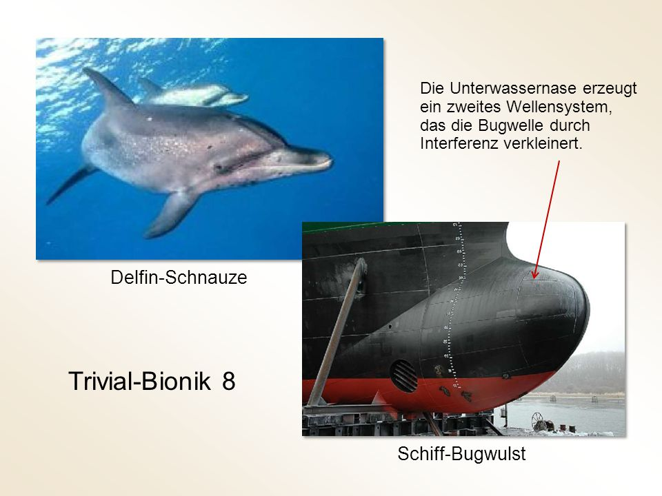 Trivial-Bionik 8 Delfin-Schnauze Schiff-Bugwulst