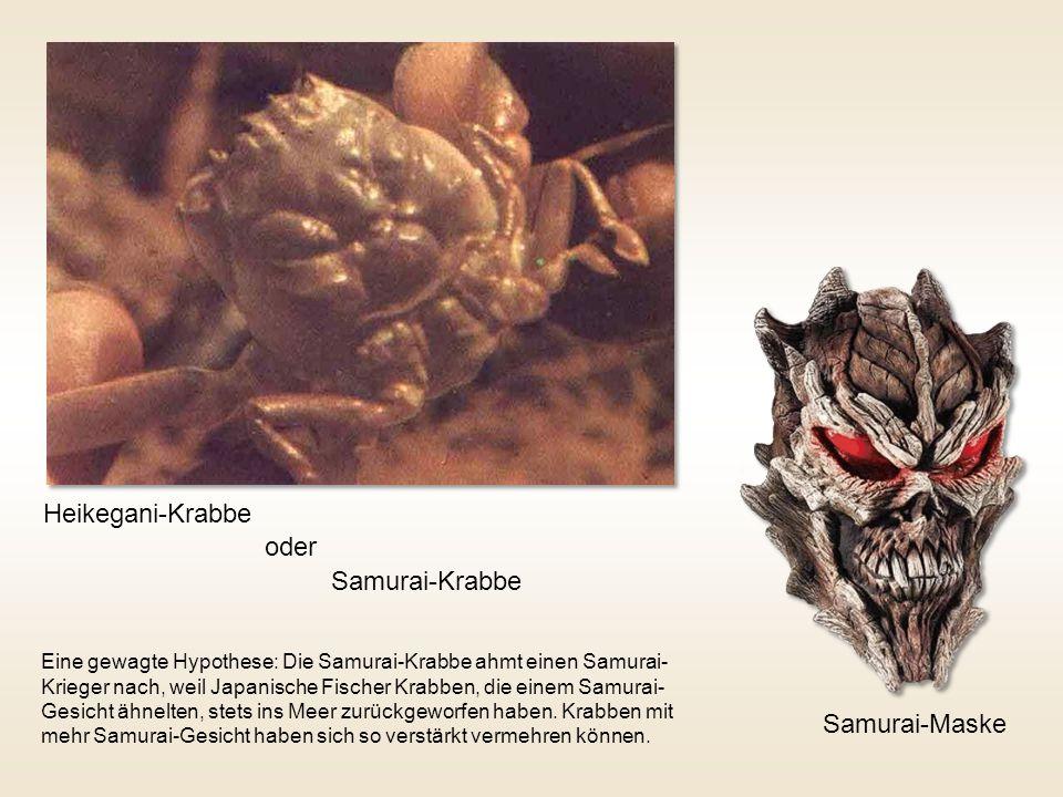 Heikegani-Krabbe oder Samurai-Krabbe Samurai-Maske