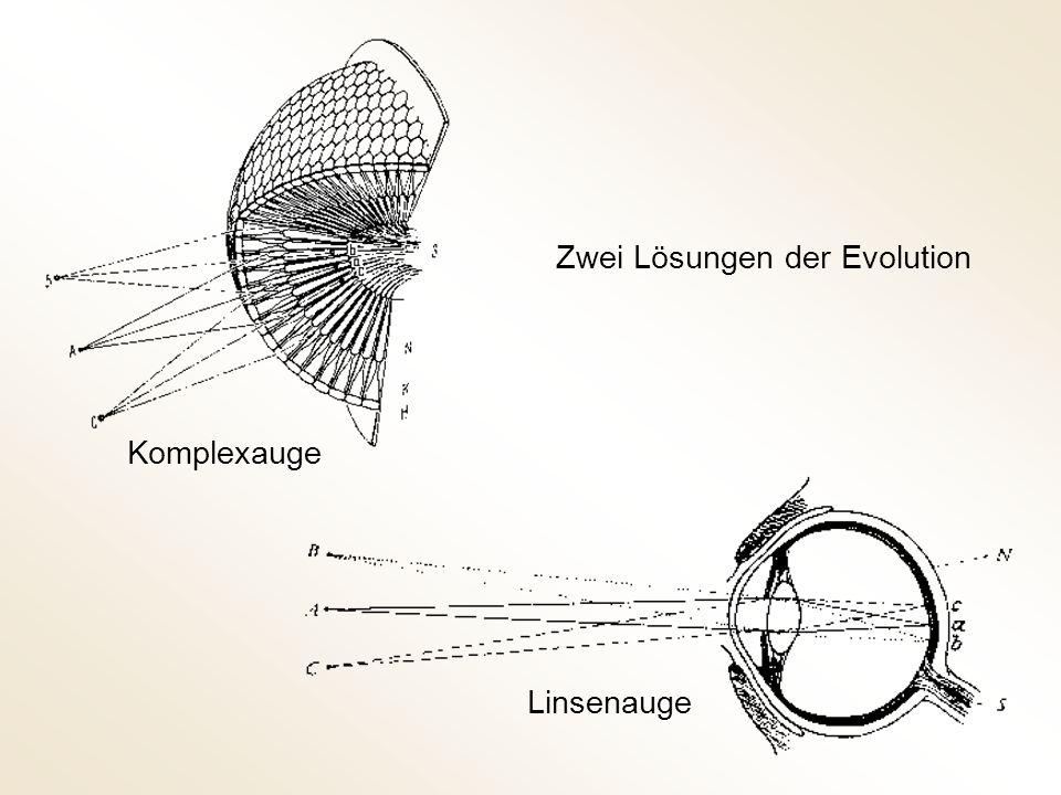 Zwei Lösungen der Evolution