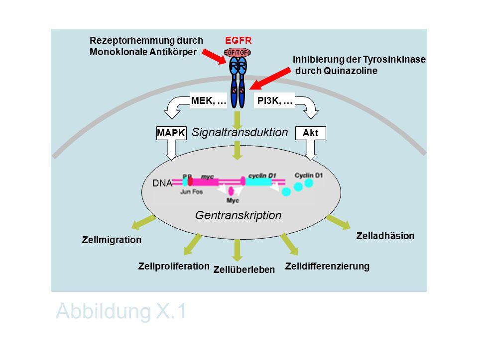 Abbildung X.1 R Signaltransduktion Gentranskription