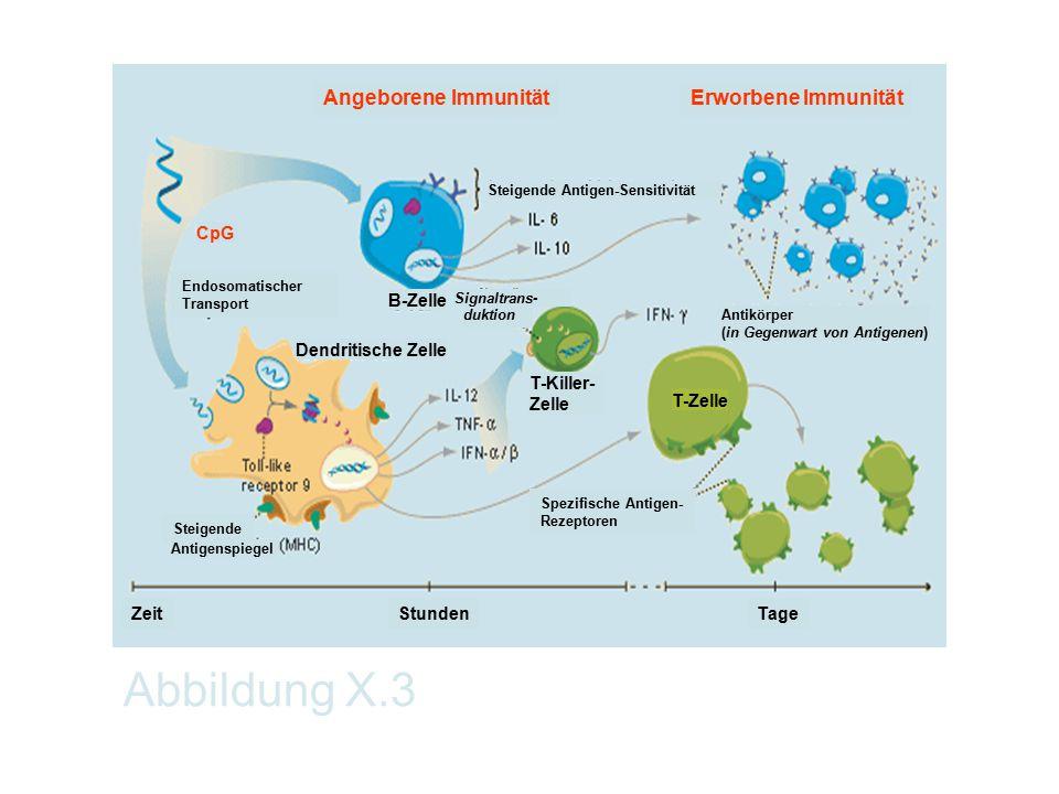 Abbildung X.3 Angeborene Immunität Erworbene Immunität T-Zelle Zeit