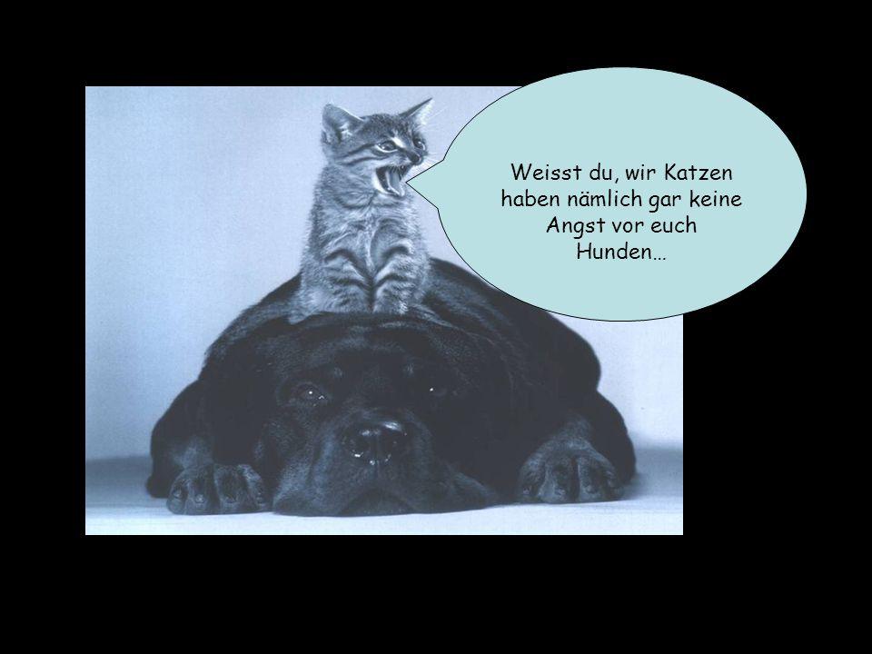 Weisst du, wir Katzen haben nämlich gar keine Angst vor euch Hunden…