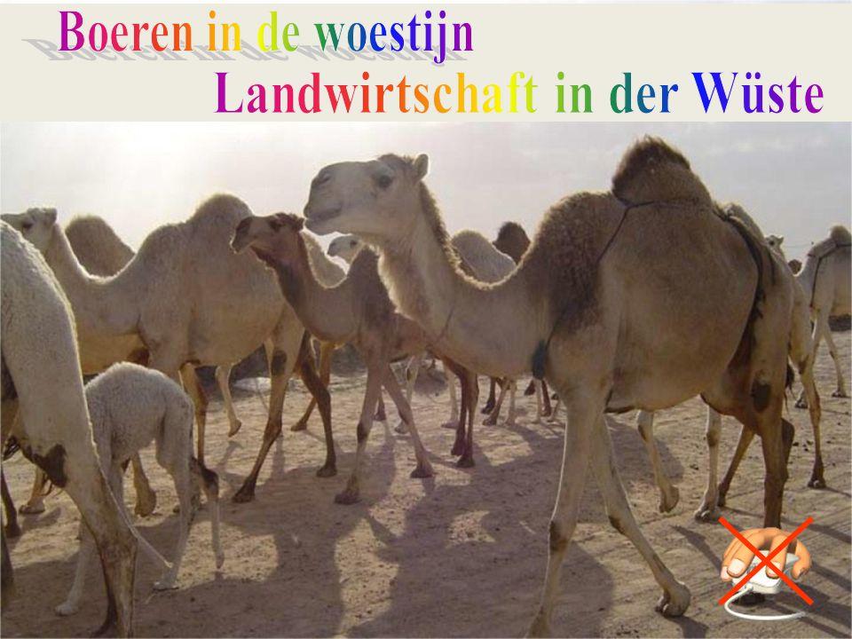 Landwirtschaft in der Wüste