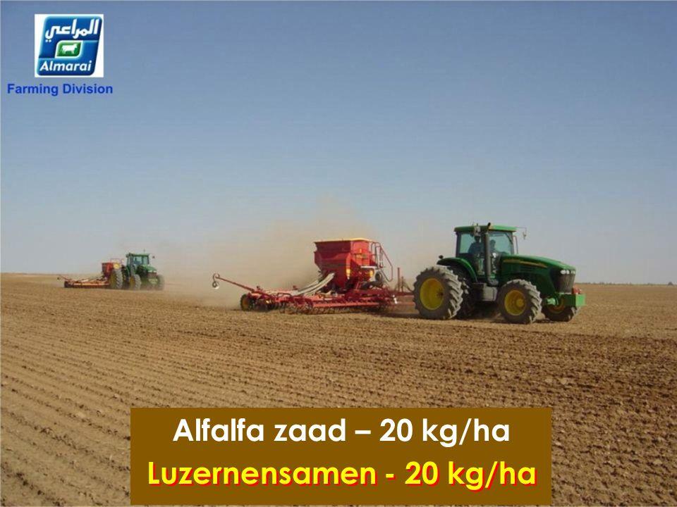 Alfalfa zaad – 20 kg/ha Luzernensamen - 20 kg/ha