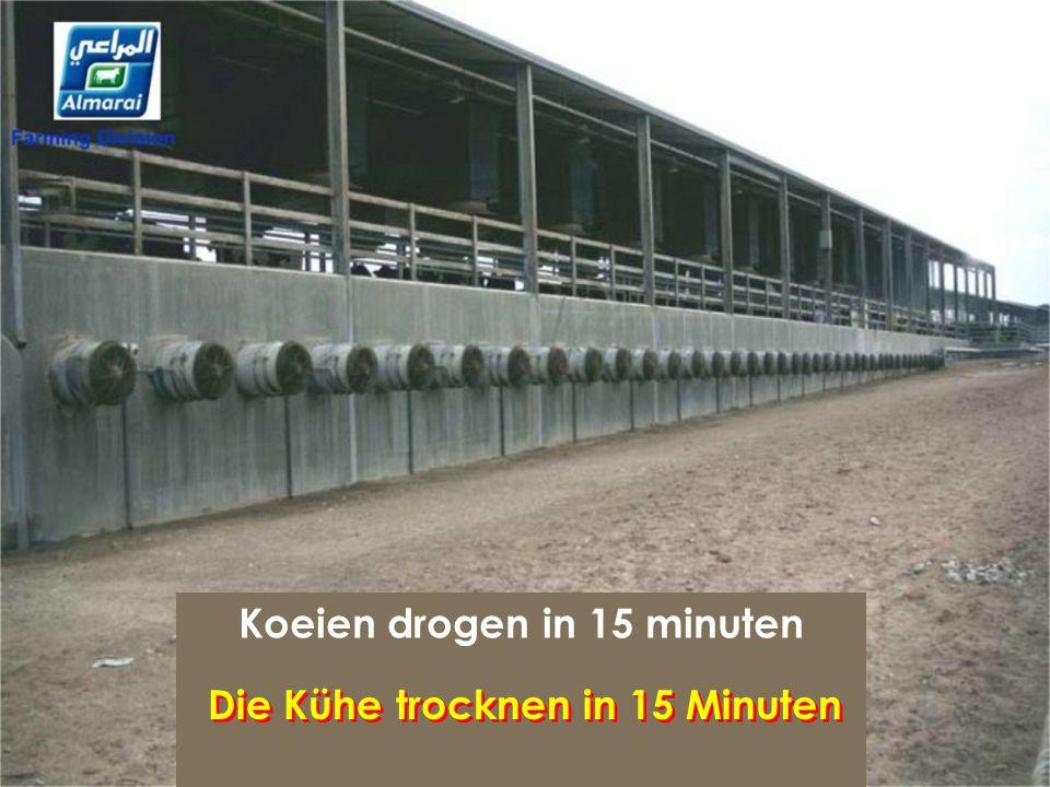Koeien drogen in 15 minuten Die Kühe trocknen in 15 Minuten
