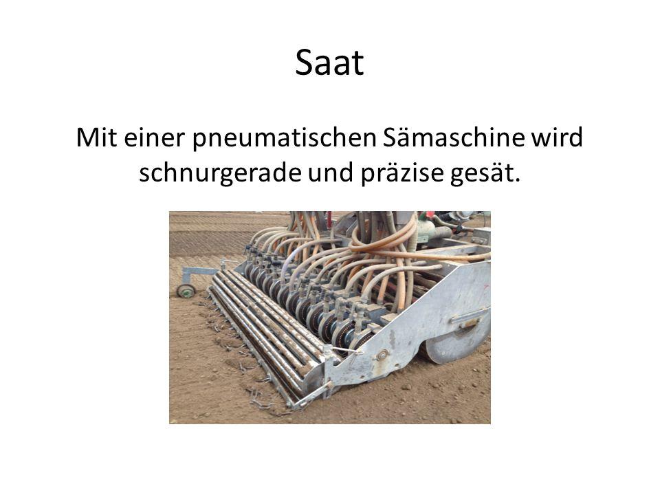 Saat Mit einer pneumatischen Sämaschine wird schnurgerade und präzise gesät.