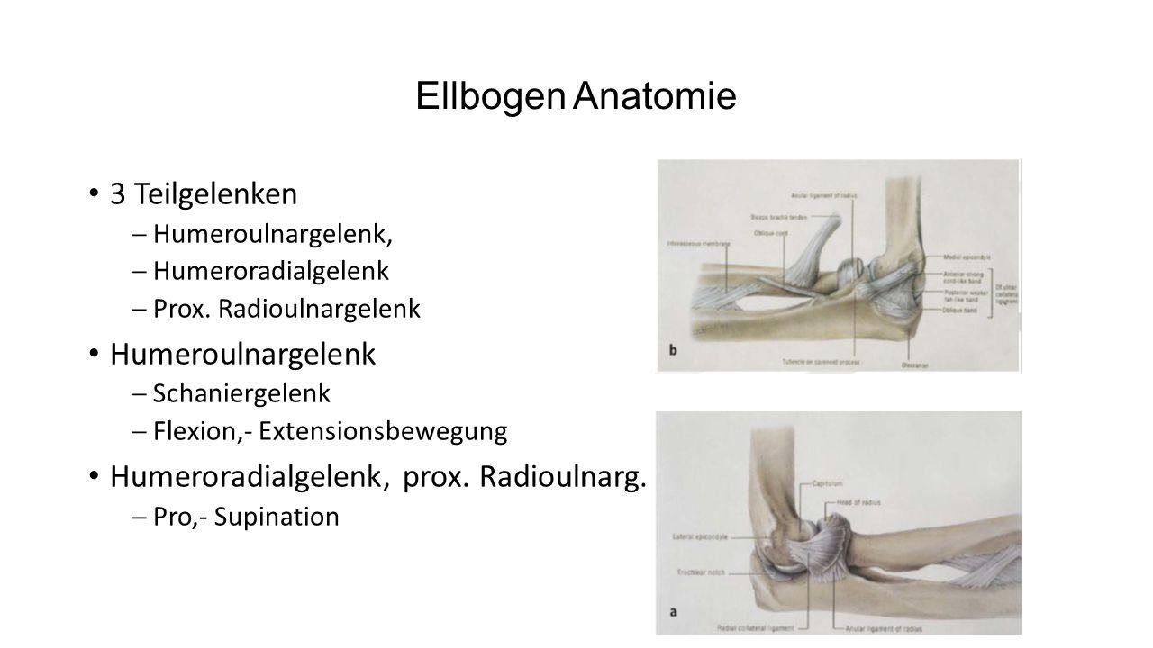 Ellbogen Anatomie 3 Teilgelenken Humeroulnargelenk