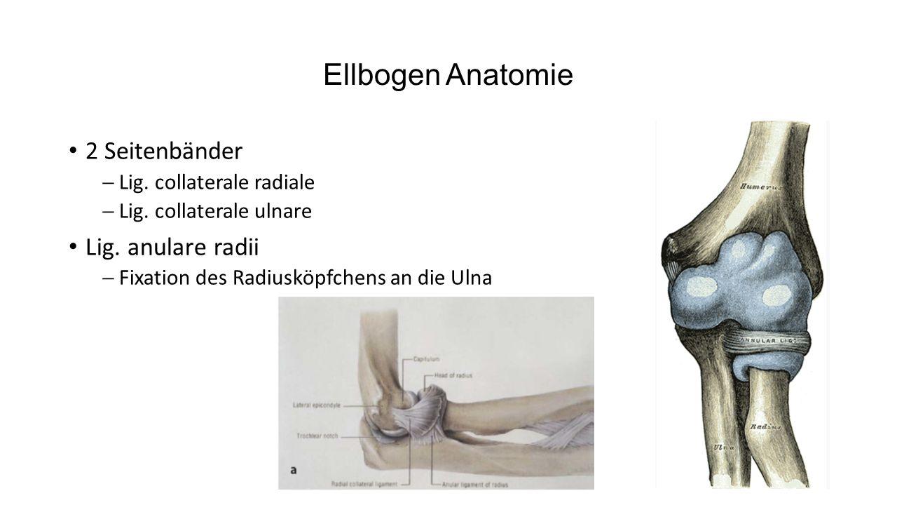 Ellbogen Anatomie 2 Seitenbänder Lig. anulare radii