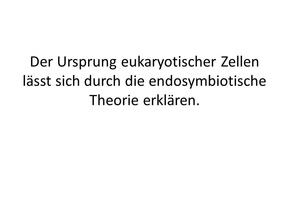 Der Ursprung eukaryotischer Zellen lässt sich durch die endosymbiotische Theorie erklären.