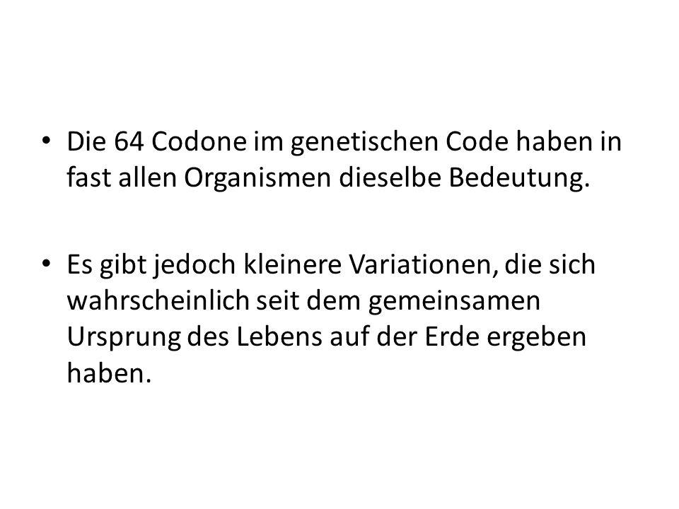 Die 64 Codone im genetischen Code haben in fast allen Organismen dieselbe Bedeutung.