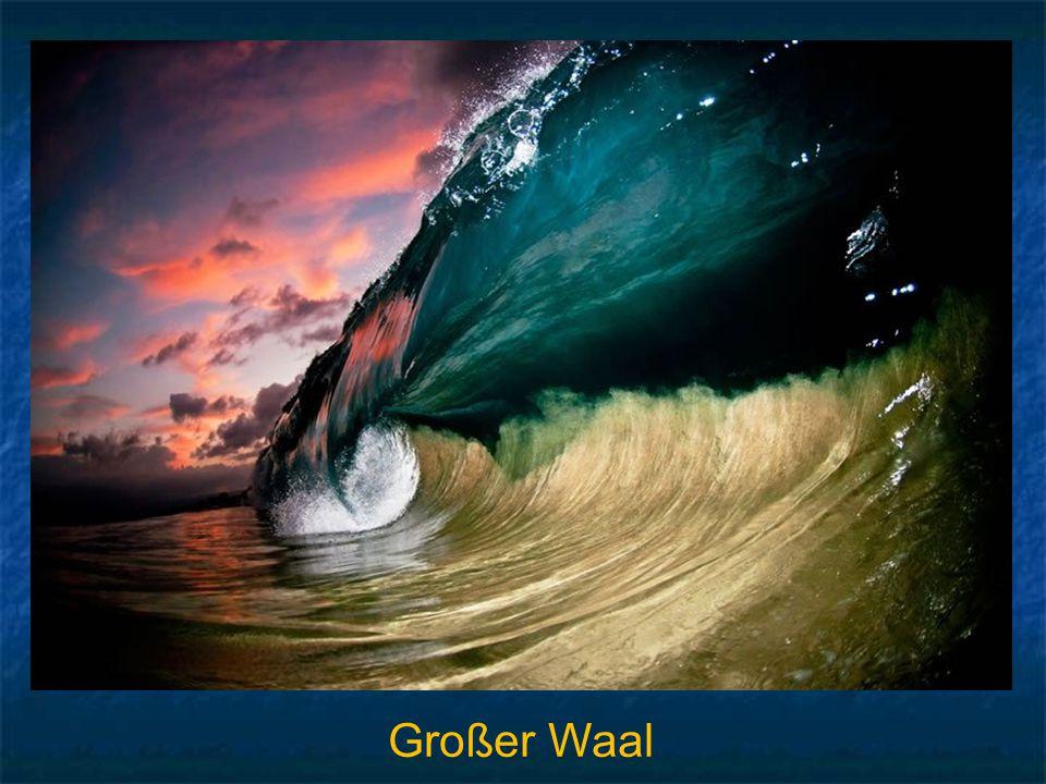 Großer Waal