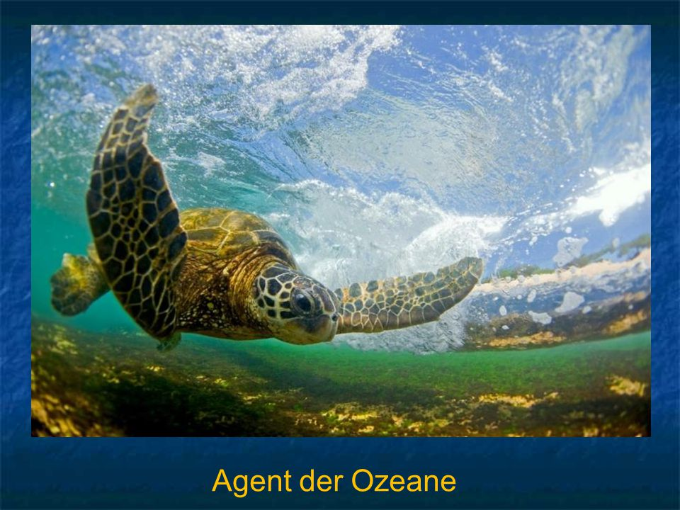 Agent der Ozeane