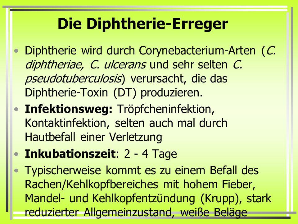 Die Diphtherie-Erreger
