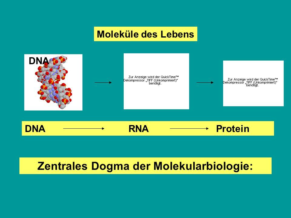 Zentrales Dogma der Molekularbiologie: