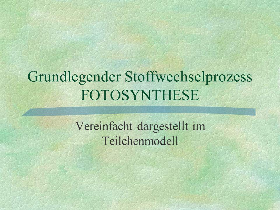 Grundlegender Stoffwechselprozess FOTOSYNTHESE