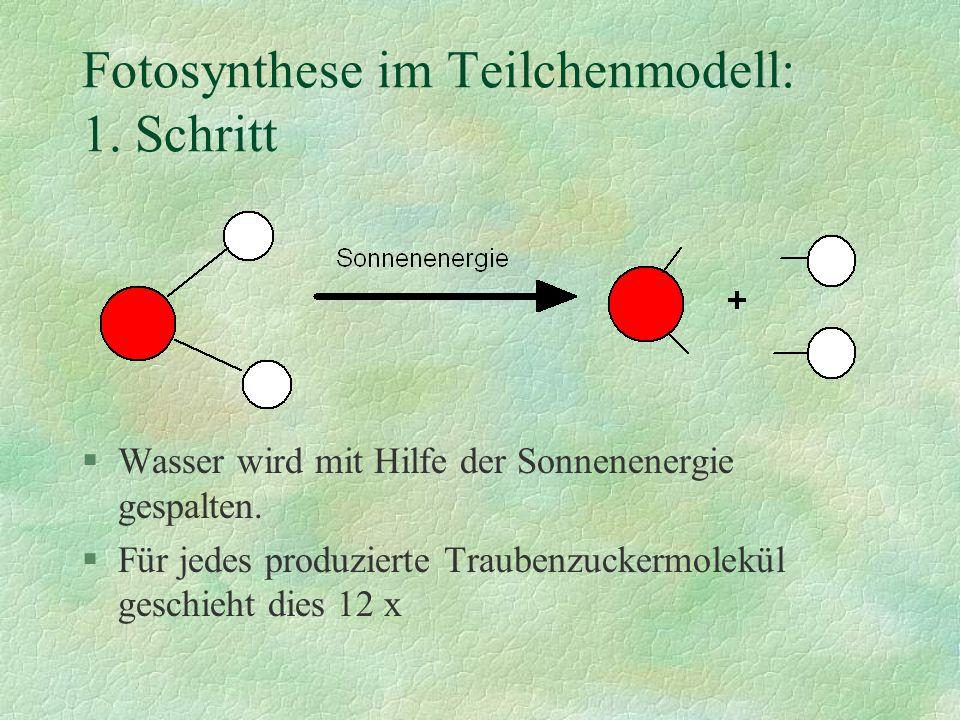 Fotosynthese im Teilchenmodell: 1. Schritt