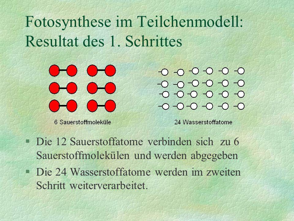 Fotosynthese im Teilchenmodell: Resultat des 1. Schrittes