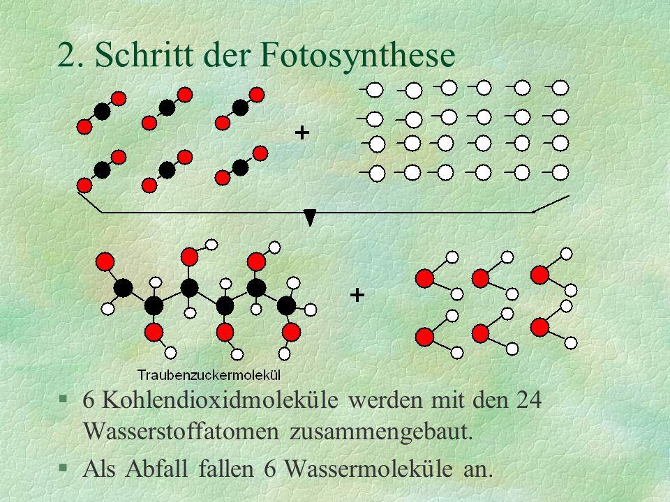 2. Schritt der Fotosynthese