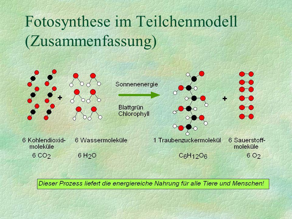 Fotosynthese im Teilchenmodell (Zusammenfassung)