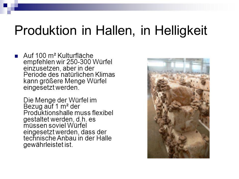 Produktion in Hallen, in Helligkeit
