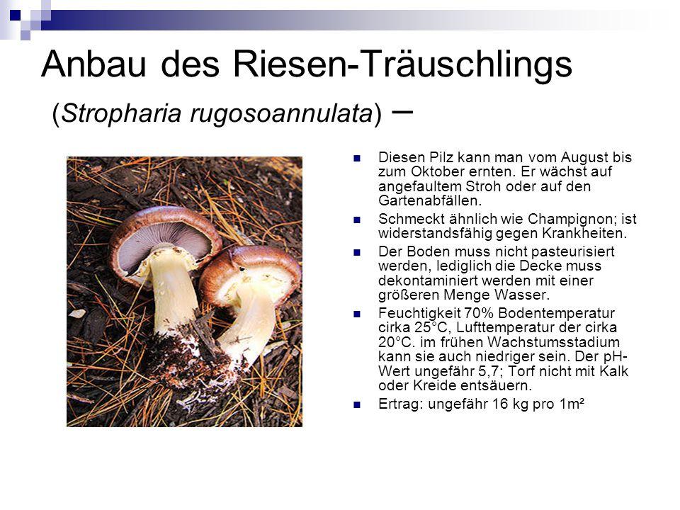 Anbau des Riesen-Träuschlings (Stropharia rugosoannulata) –