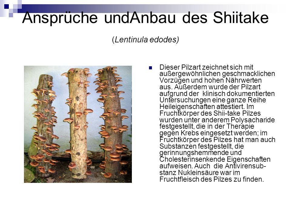 Ansprüche undAnbau des Shiitake (Lentinula edodes)