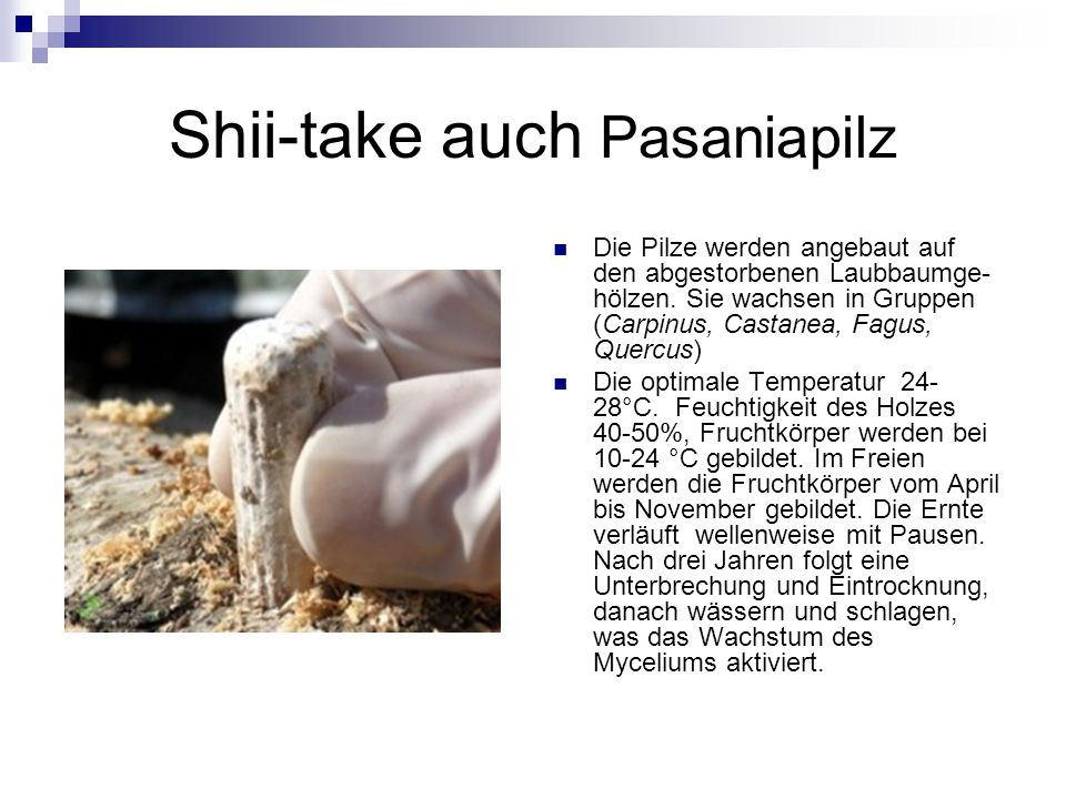 Shii-take auch Pasaniapilz