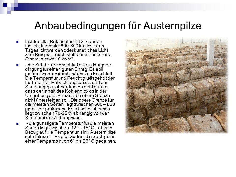 Anbaubedingungen für Austernpilze