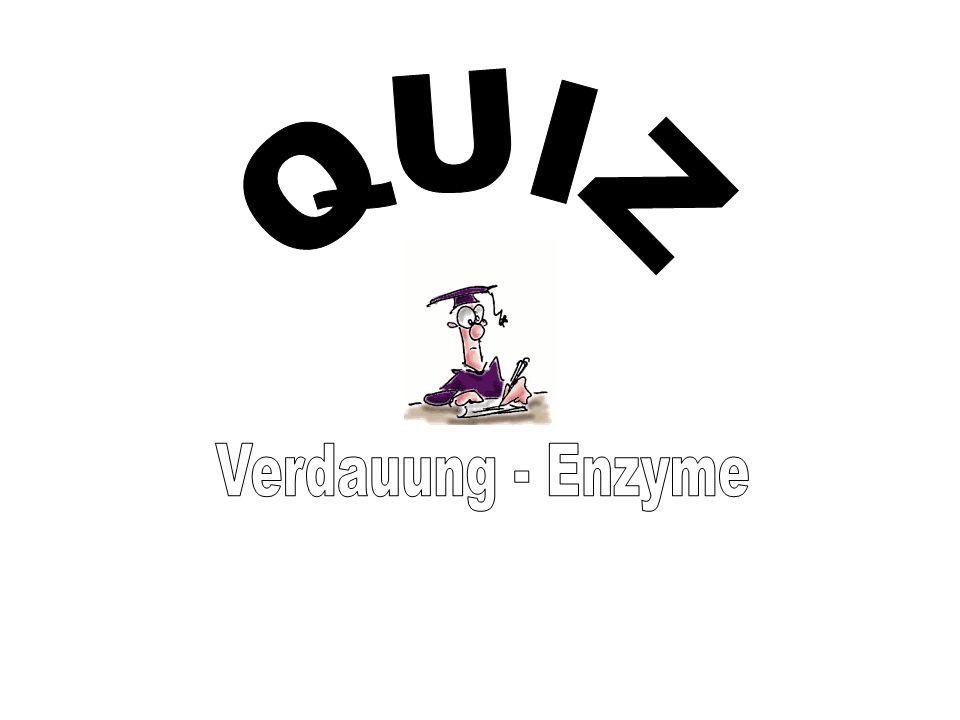 QUIZ Verdauung - Enzyme