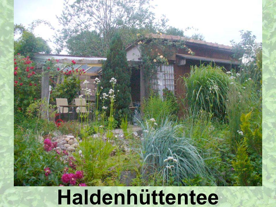 Die Haldenhütte liegt an einem sanften Abhang Richtung Päffikersee