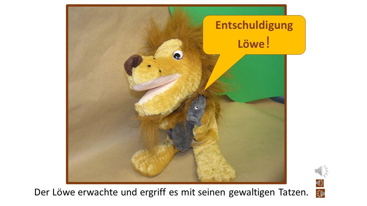 Entschuldigung Löwe! Der Löwe erwachte und ergriff es mit seinen gewaltigen Tatzen.