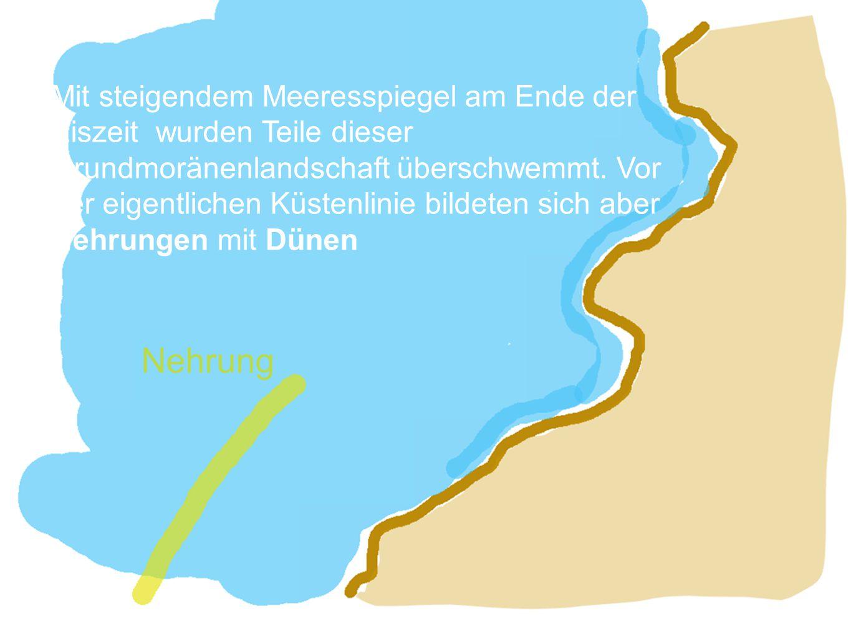 Mit steigendem Meeresspiegel am Ende der Eiszeit wurden Teile dieser Grundmoränenlandschaft überschwemmt. Vor der eigentlichen Küstenlinie bildeten sich aber Nehrungen mit Dünen