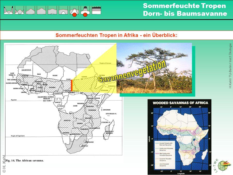 Sommerfeuchten Tropen in Afrika - ein Überblick: