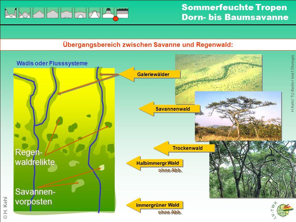 Übergangsbereich zwischen Savanne und Regenwald: