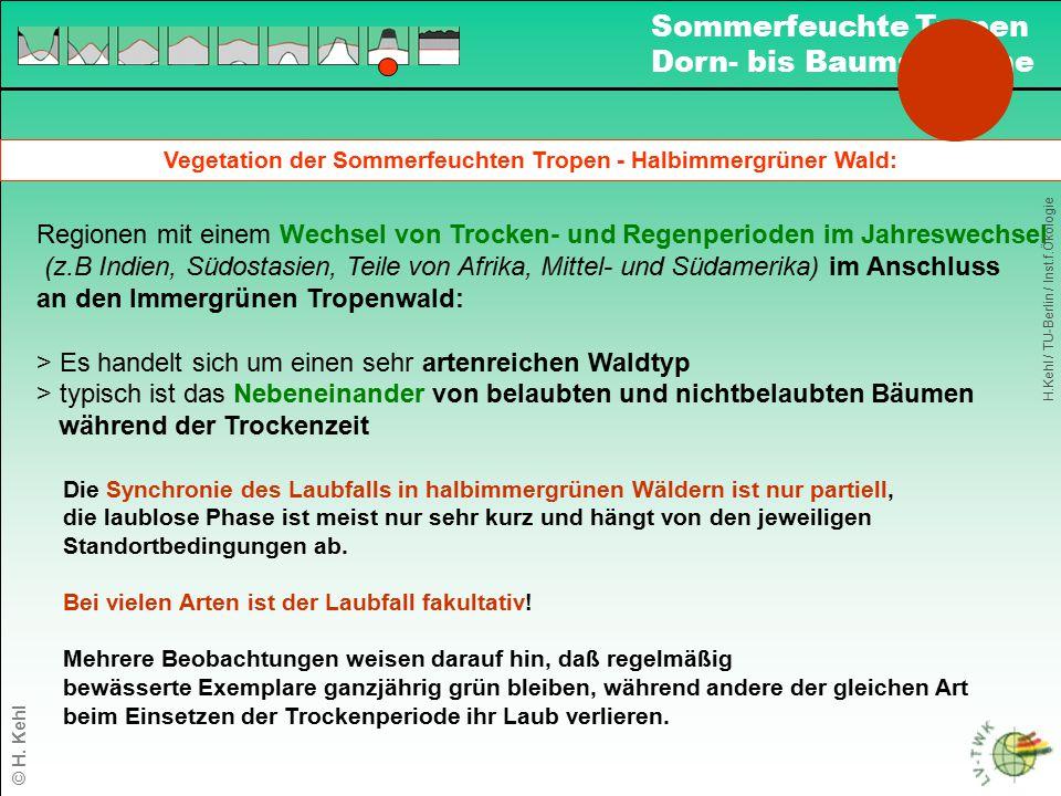 Vegetation der Sommerfeuchten Tropen - Halbimmergrüner Wald: