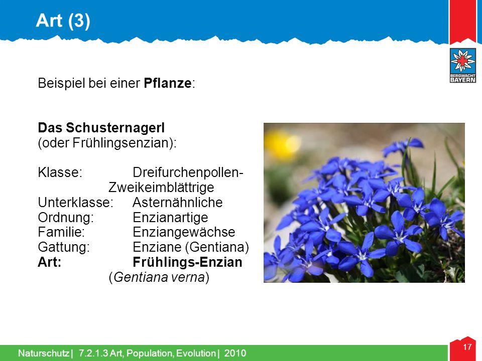 Art (3) Beispiel bei einer Pflanze: Das Schusternagerl