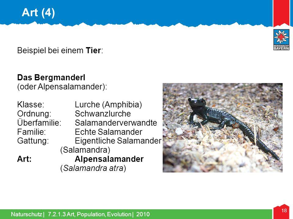 Art (4) Beispiel bei einem Tier: Das Bergmanderl