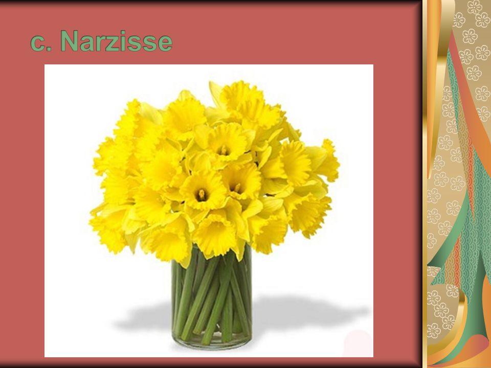 c. Narzisse