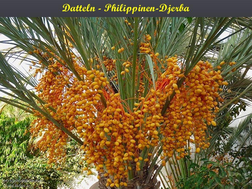 Datteln - Philippinen-Djerba