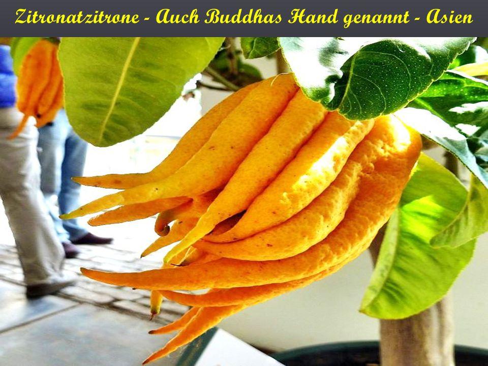 Zitronatzitrone - Auch Buddhas Hand genannt - Asien