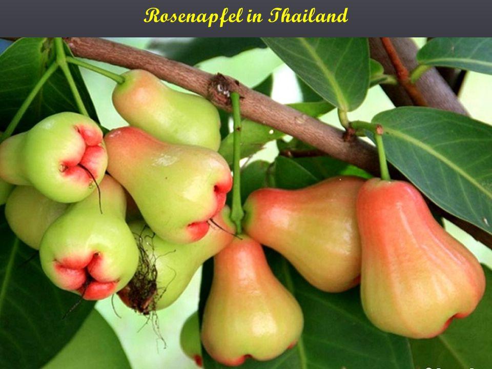 Rosenapfel in Thailand