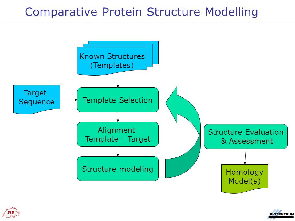 Comparative Protein Structure Modelling