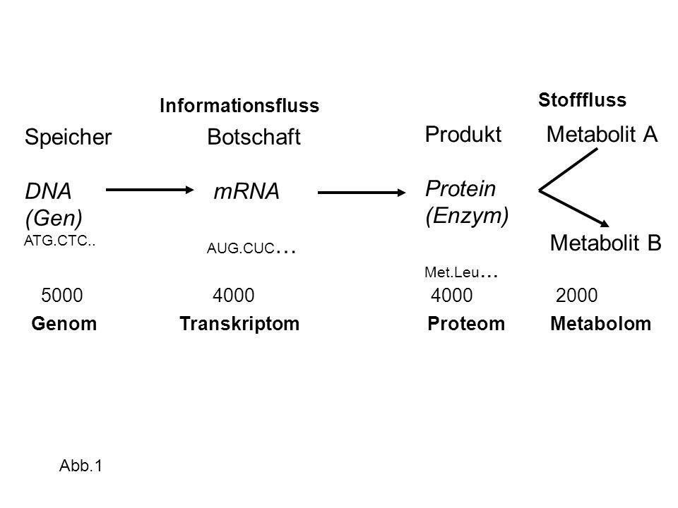 Genom Transkriptom Proteom Metabolom