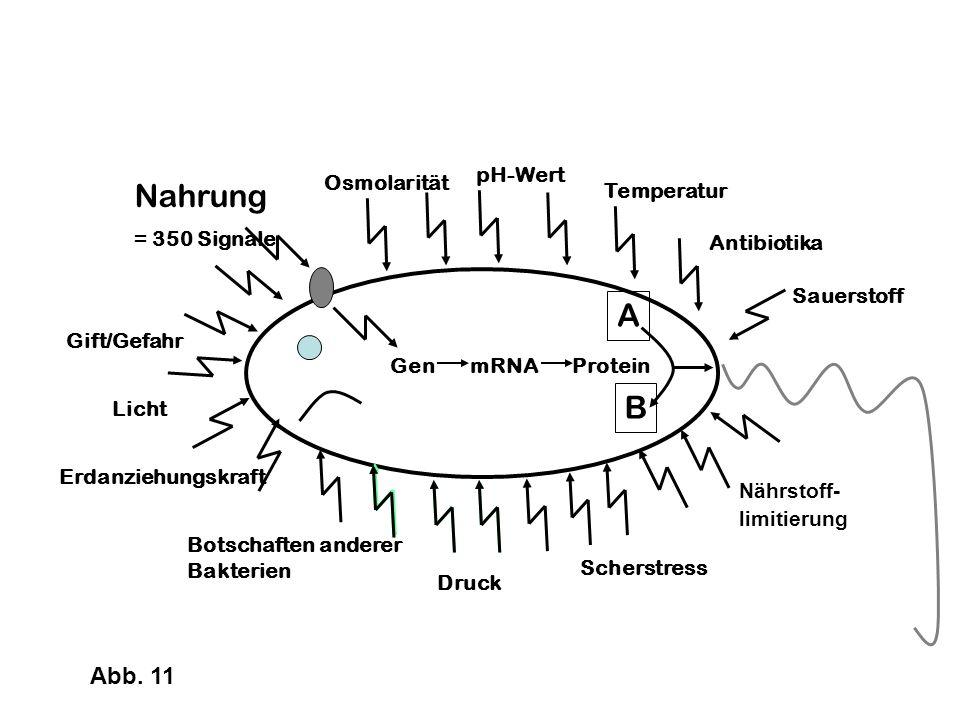 Nahrung = 350 Signale A B Abb. 11 pH-Wert Osmolarität Temperatur