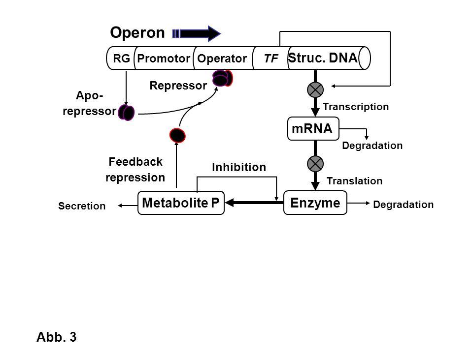 Operon mRNA Metabolite P Enzyme Abb. 3