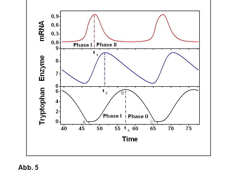 The interactions of gene expression and cellular metabolism can lead to strong nonlinear dynamics of cells such as oscillations and multiplicity. This graph shows for example oscillations of mRNA, enzyme and tryptophan concentrations in the tryptophan biosynthesis under certain conditions. The study of cellular dynamics requires the expertise of engineers in system analysis and dynamic modeling and is also within my research interest.