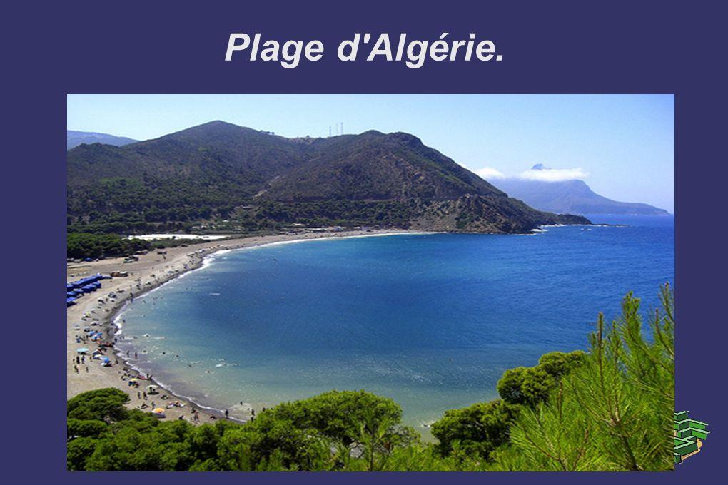 Plage d Algérie.